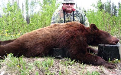 Boars, Bear, Capes and Hides: Lingo for New BC Black Bear Hunters