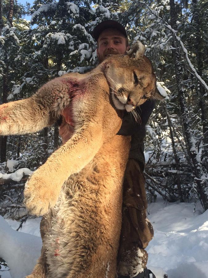 BC Cougar and Lynx Hunts