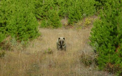 How to be Scent-Free for your Next Trophy BC Black Bear Hunt